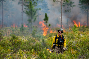 Fire management to maintain forest ecosystems in USA